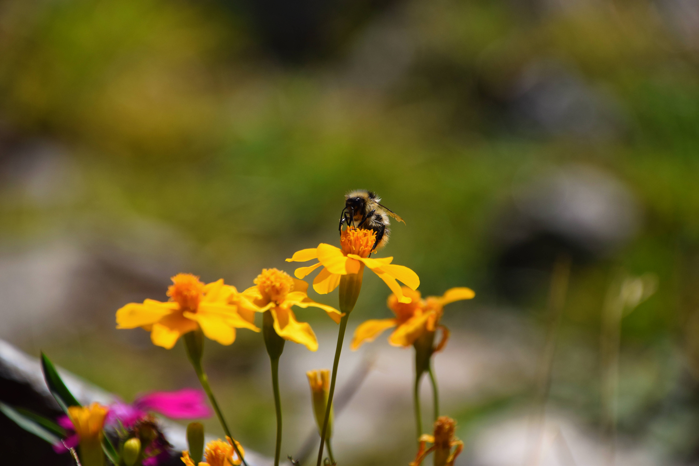 Blüte-Biene-Insekt